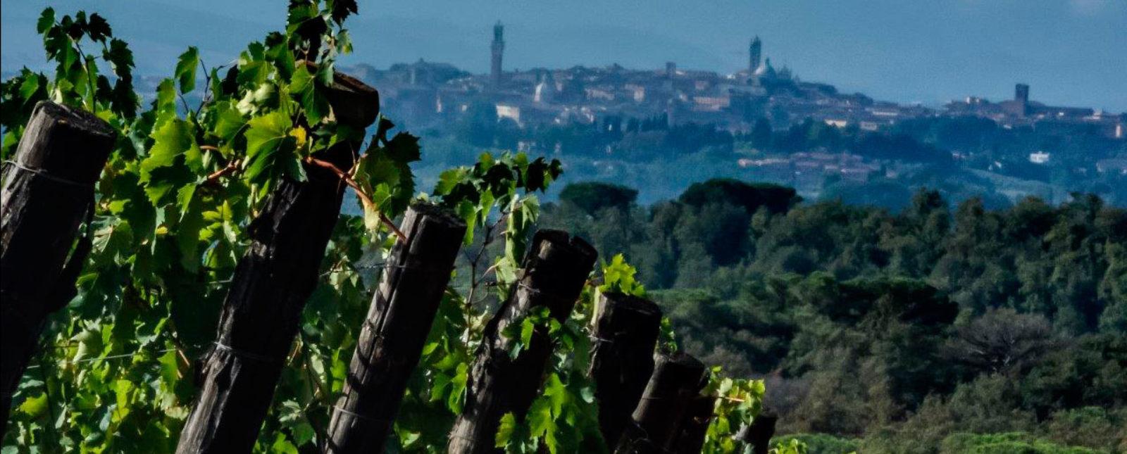 Terra-di-Seta_vista-Siena